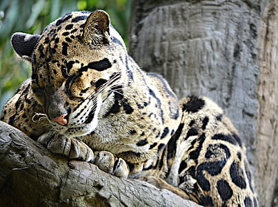 macro photography of leopard