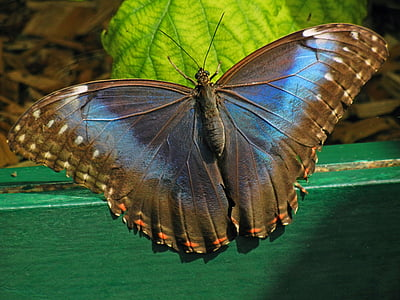 brown butterfly on green wooden surface