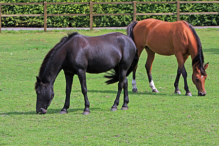 two brown and black horses on grass field