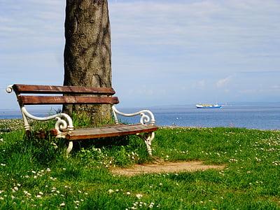 bench beside tree on grass field near sea