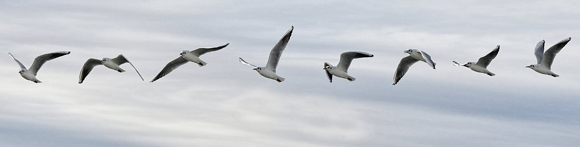 selective focus photograph of bird