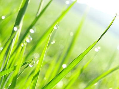 macro shot photography of green grass