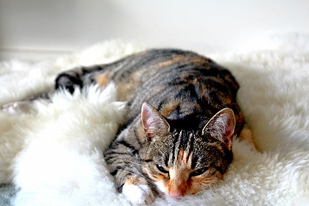 shallow focus photo of brown cat