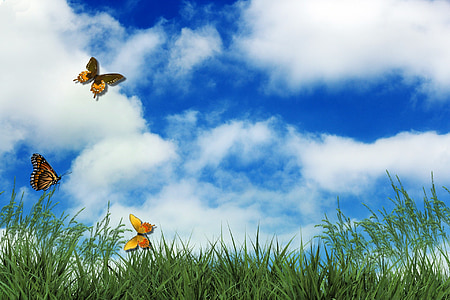 three Monarch butterflies fluttering over green grass field