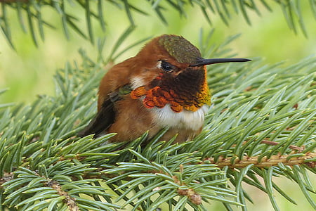 brown and black humming bird on green leaf tree