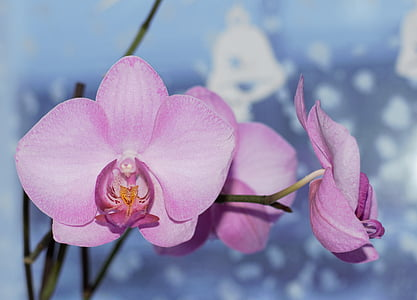 closeup photo of purple orchid flowers