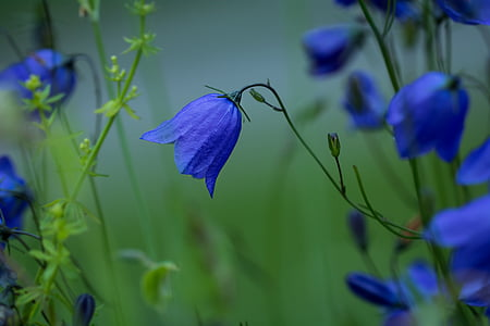 selective focus photography of purple flower