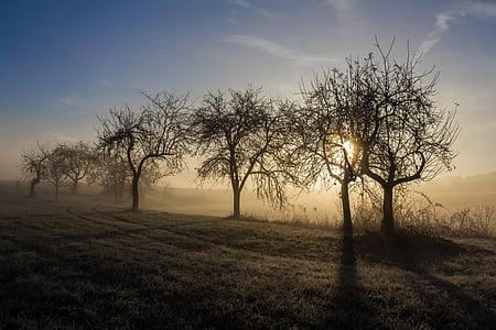 bare trees on gray soil during sunset