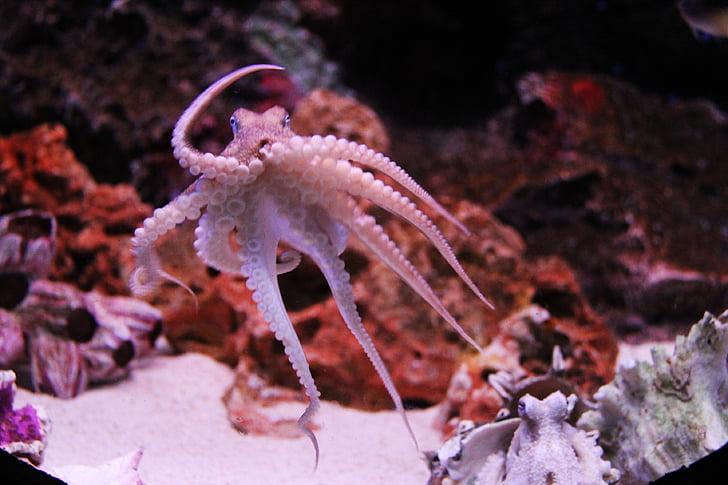 gray octopus