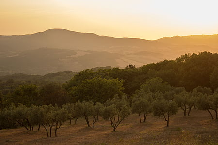 green leafed trees during sunset
