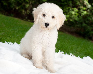white dog sitting on white textile on green grass field