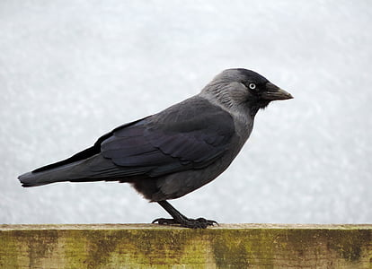 black and gray bird