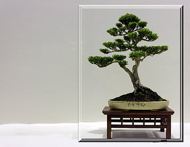 Royalty Free Photo Bonsai Tree Pickpik