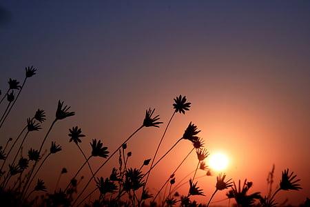 silhouette of flowers under sun
