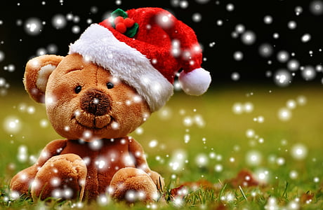 photo of brown teddy bear wearing Santa hat sitting on grass