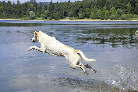 white dog jumped on body of water during daytime