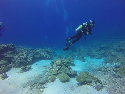 person doing scuba diving