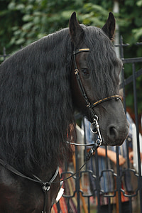 black and brown horse during daytime