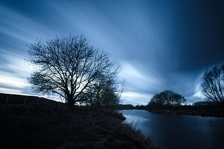 silhouette photo of bare trees near body of water