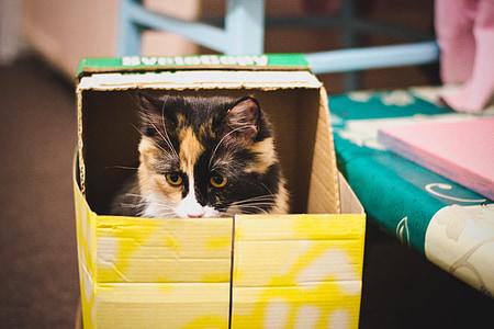 tortoiseshell cat in box