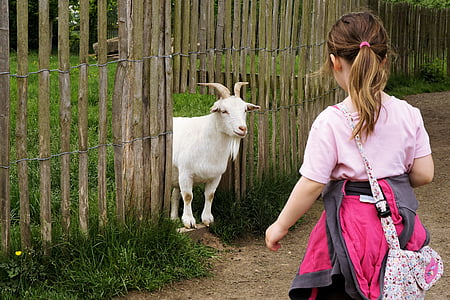 woman wearing pink top looking at white goat on brown wooden fence