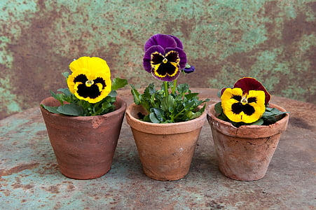 three green leaf plants with yellow flowers on brown pots