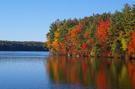 body of water near green and red leaf trees