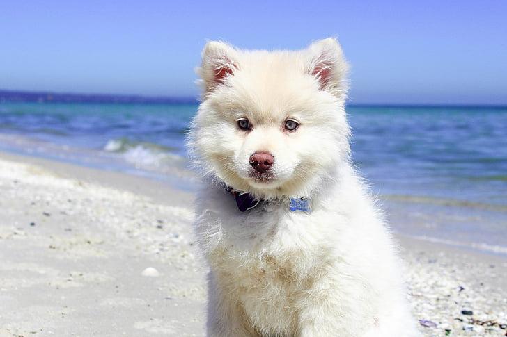 Alaskan Malamute Puppy On Seas