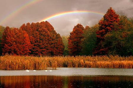 forest under rainbow
