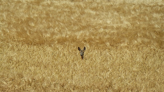 animal on brown grass