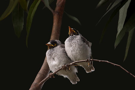 low angle photography of two passerine birds perched on stem of tree