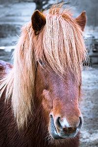 brown donkey closeup photo