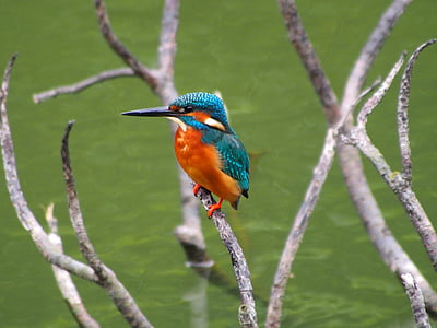 selective photography of hamming bird