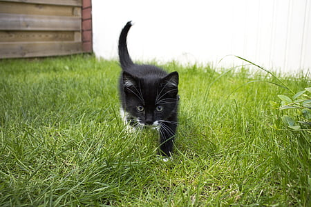 black and white kitten on grass field