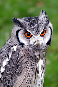 closeup photo of gray and black owl