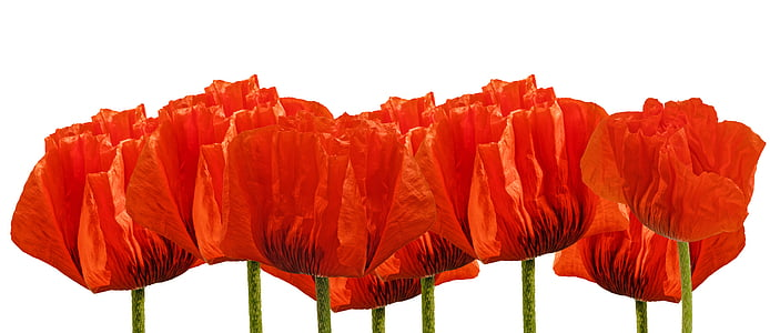 red flowers decor