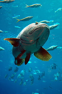 green fish underwater photography