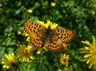 macro photography of orange butterfly on yellow flower