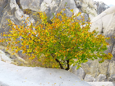 green-and-yellow leafed plant near gray stone