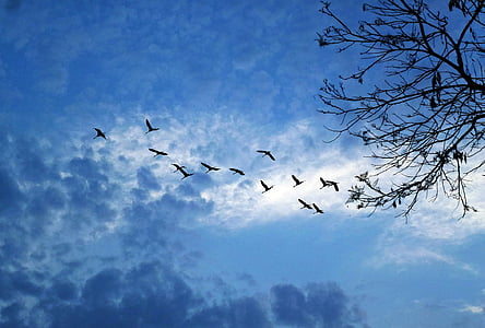 silhouette of birds flying under blue sky