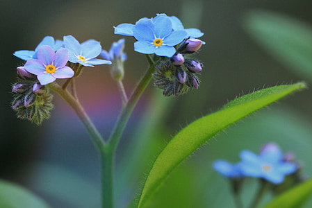 blue flowers in macro photography
