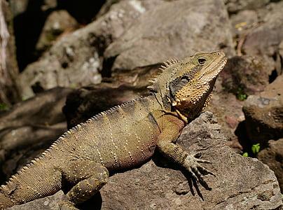 photo of beige lizard