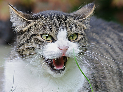 close up photo of white and gray cat