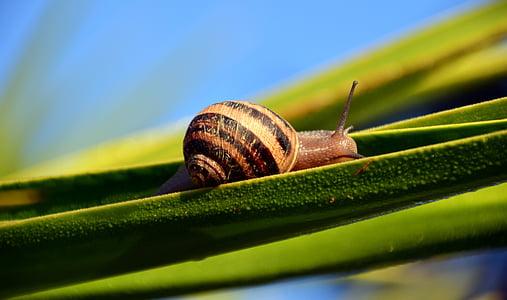 brown garden snail on green leaf in tilt-shift photography