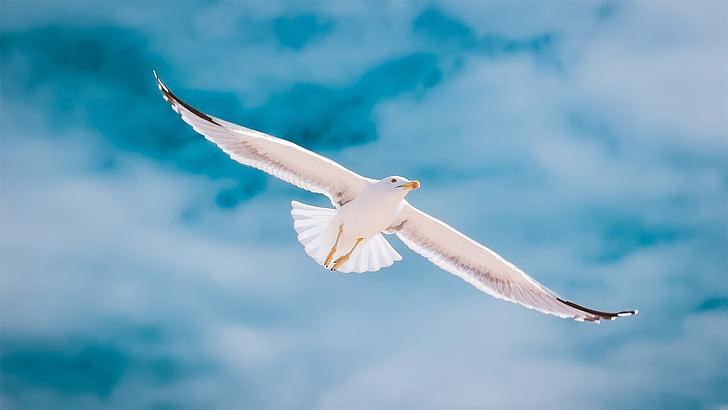 seagull during daytime