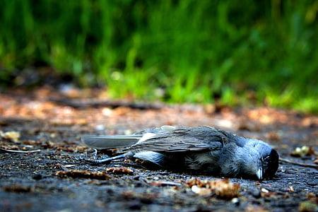 dead gray and black passerine bird