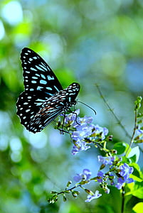 black and blue butterfly perched on blue petaled flower in closeup photography