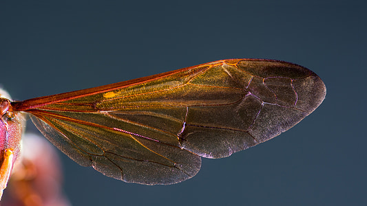 brown winged insect in closeup photography