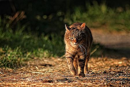 tabby cat walking on pathway