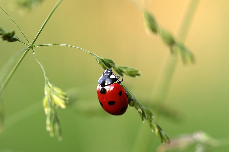 selective focus of red lady bug on green leaf plant